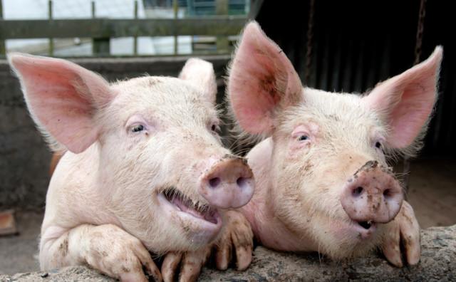 Чем животные похожи на нас, забавные факты