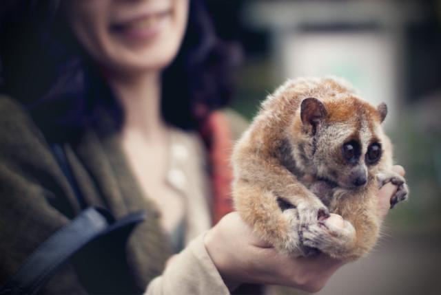 10 самых очаровательных и опасных животных