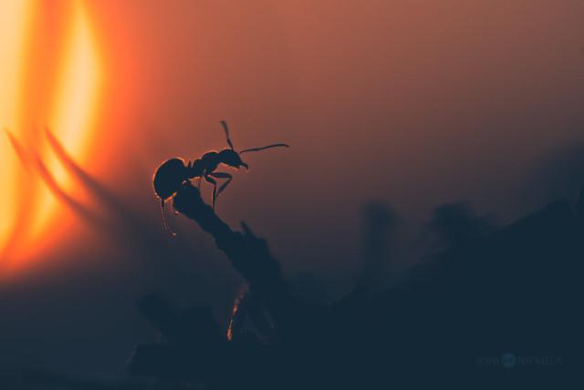 Научные факты о муравьях, которые вас потрясут