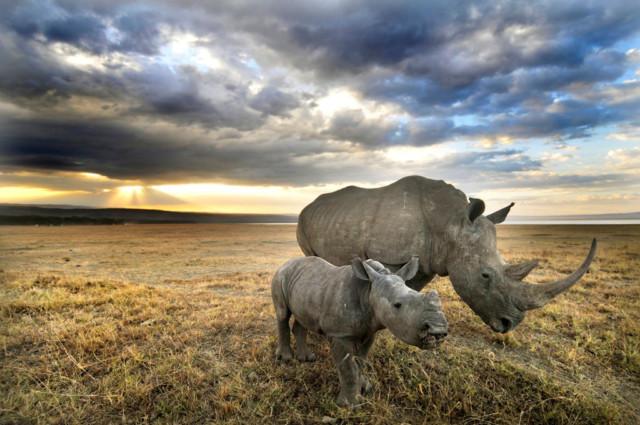 Лучшие фотографии природы по версии Wildlife