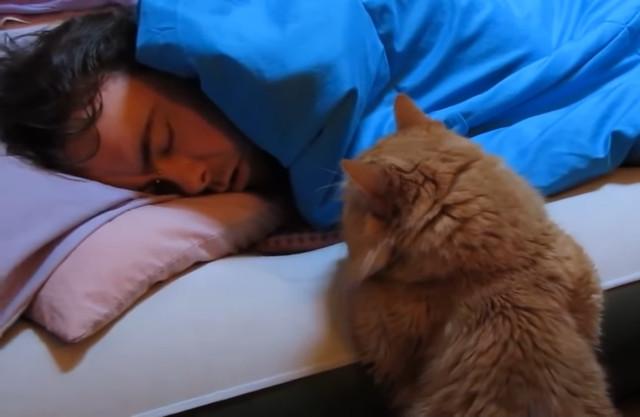 За что мы любим котов: обязанности кота по дому