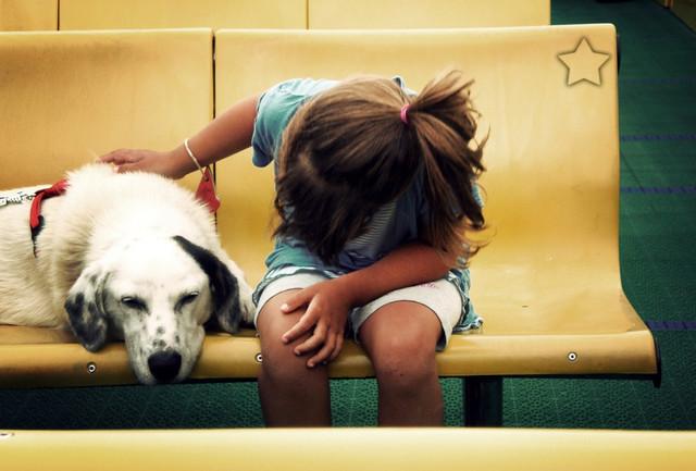 10 домашних вещей опасных для вашей собаки