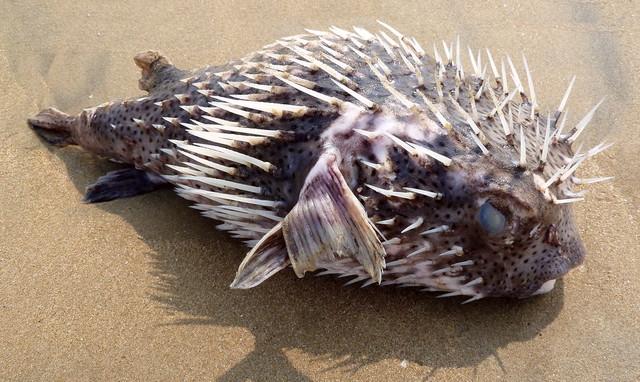 Самые опасные морские животные, ТОП-10