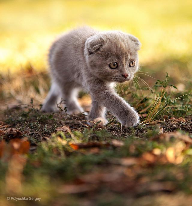 Фотограф Сергей Полюшко: эмоции животного мира