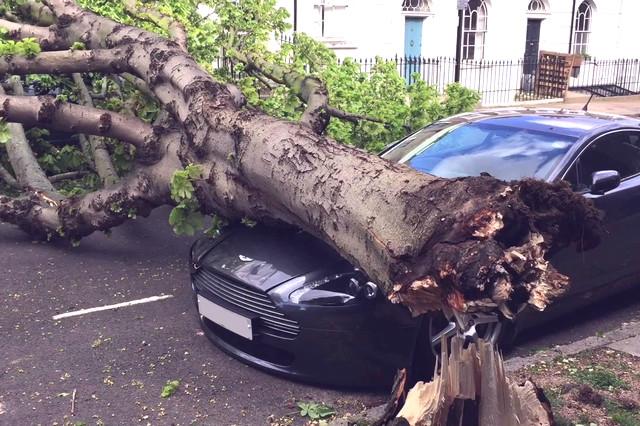 Что делать если на машину упало дерево