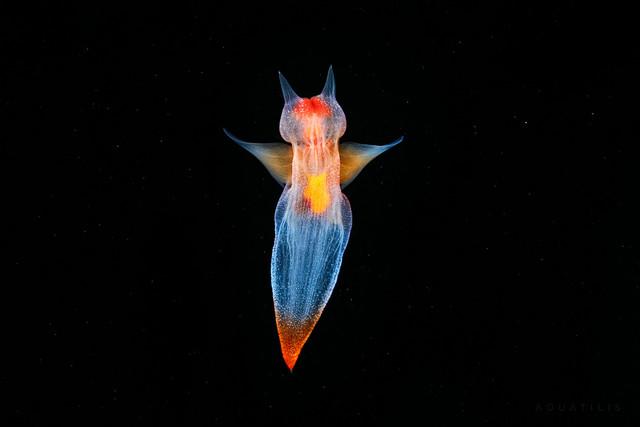 Фотограф Александр Семенов и его подводный мир