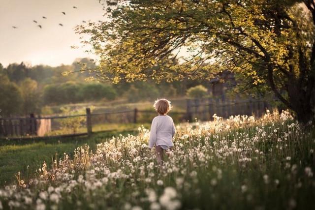 5 лучших стихотворений про лето