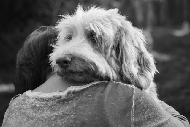 10 вещей которые терпеть не может ваша собака