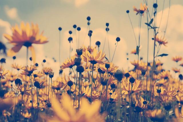 ТОП-10 цветов которые украсят любую дачу и сад