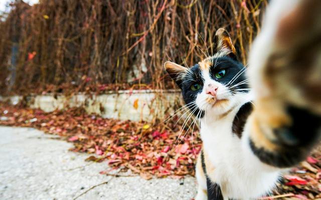 Смешные фото животных: Pet Photography Awards 2017