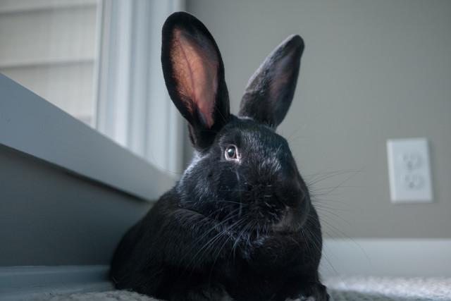 Интересные факты о зайцах для детей и взрослых