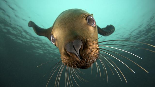 Лучшие фотографии животных под водой