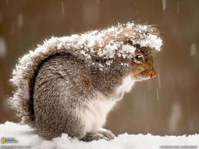 Фотоподборка: как реагируют животные на первый снег