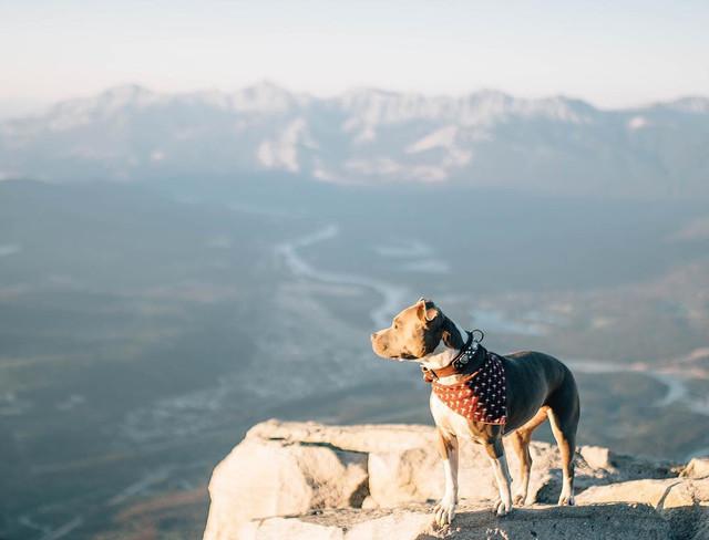 Собака путешественница покоряет горы и Instagram
