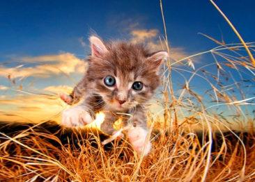 Фотограф Seth Casteel и его кошечки и собачки