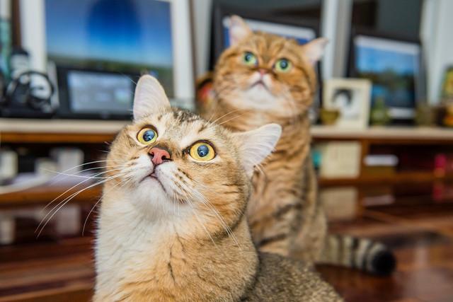 Кототерапия: 10 примеров как коты спасают наше здоровье