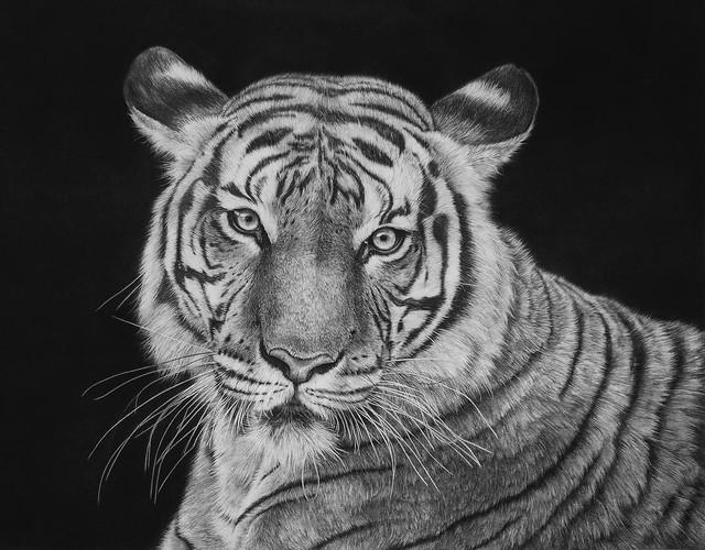 Художница-гиперреалист Monica Lee и ее мир животных