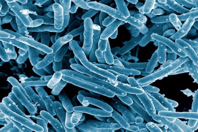 Самые грязные вещи в быту: берегись микробов!