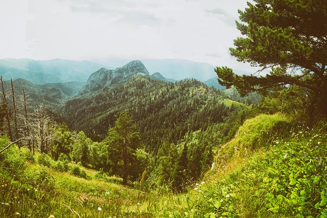 Самые красивые леса россии