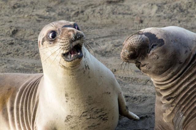 Самые забавные и смешные фотографии животных