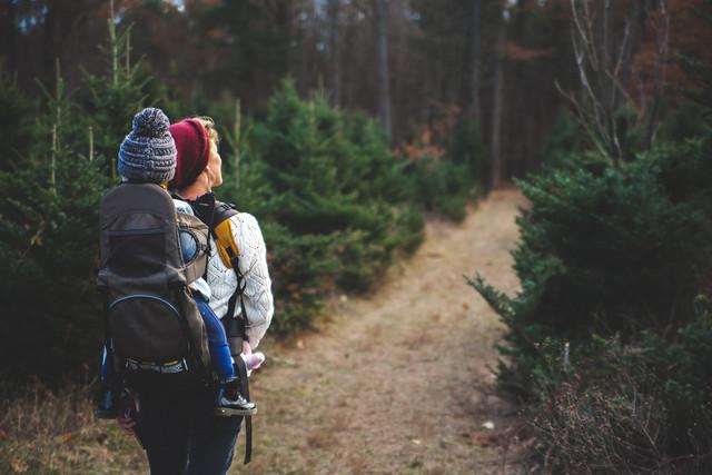 Самые красивые леса России: туризм и отдых