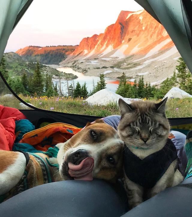 Звезды Instagram: кот и пес путешественники