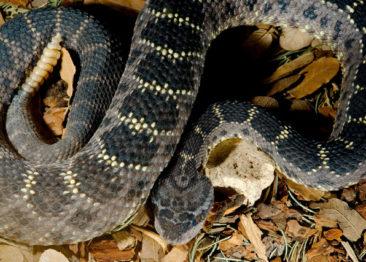 ТОП-10 самых опасных и ядовитых змей в мире