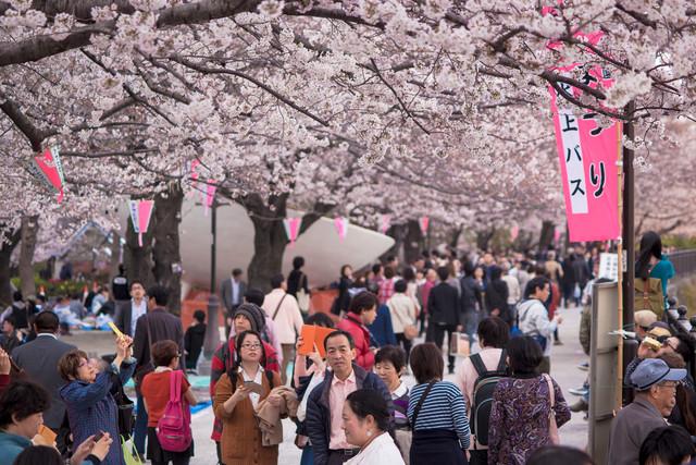 Почему в Японии все хорошо а у нас все плохо