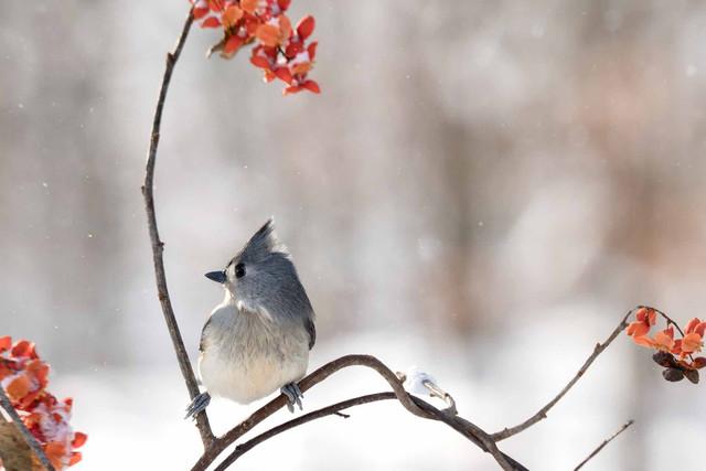 5 способов помочь птицам и животным пережить зиму