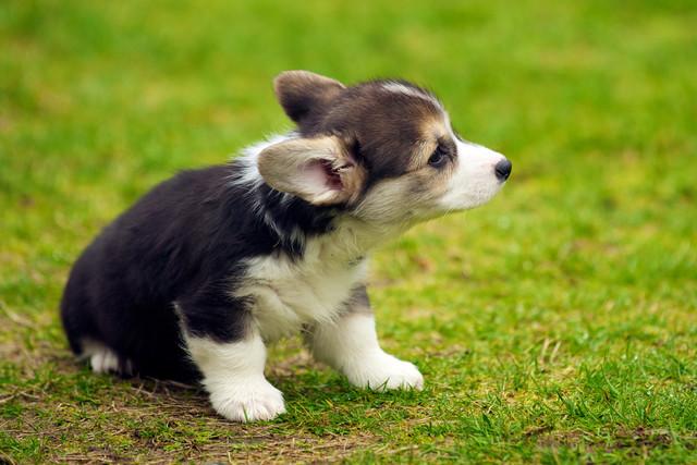 Как назвать собаку: 200 собачьих кличек со значением