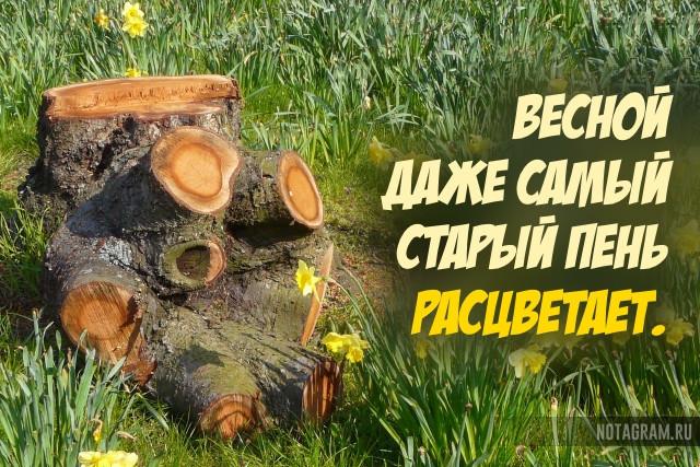 Позитивные цитаты о весне в которых поймана вся суть