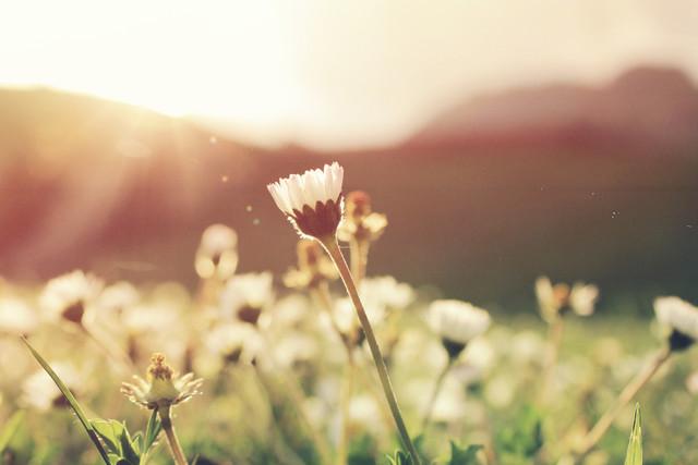 Стихи про весну: лучшие стихотворения о весне