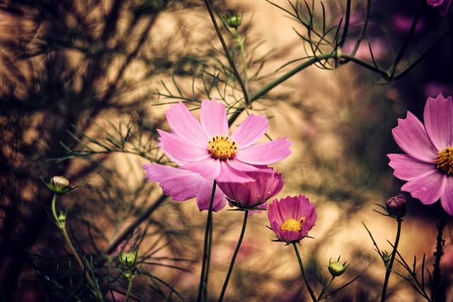 Лучшие садовые цветы для дачи и загородного дома
