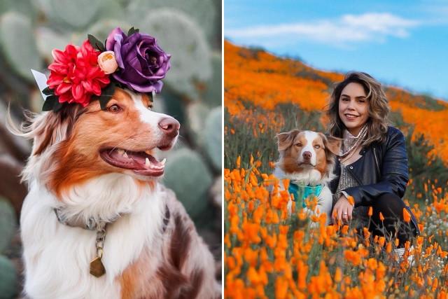 Цветочные короны на животных - это прекрасно!