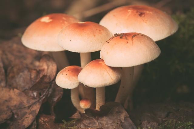 Красивые фотографии лесных и полевых грибов