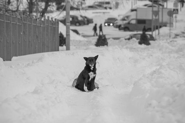 Как помочь выжить бездомным животным зимой