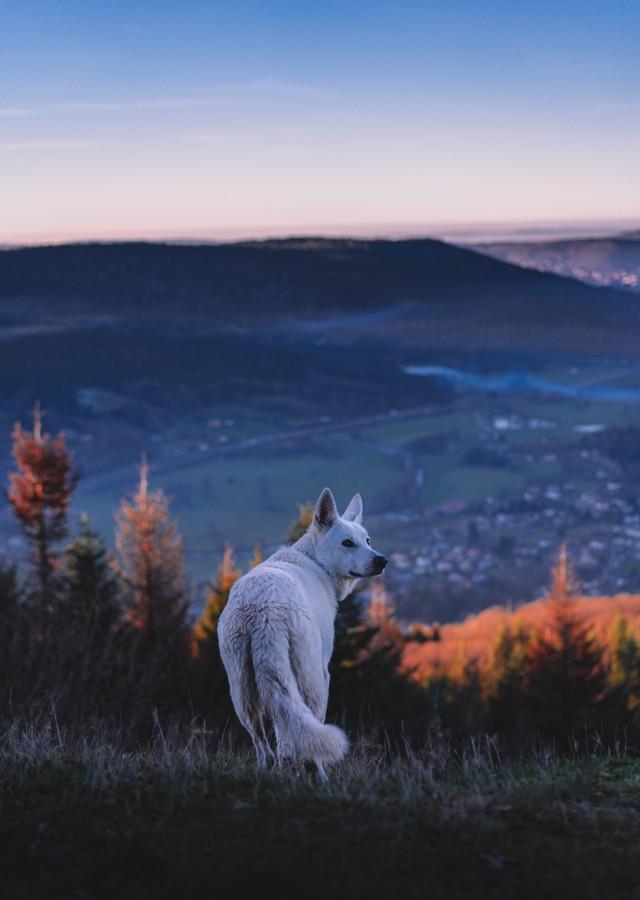 Фотографии волков: красивые и грозные
