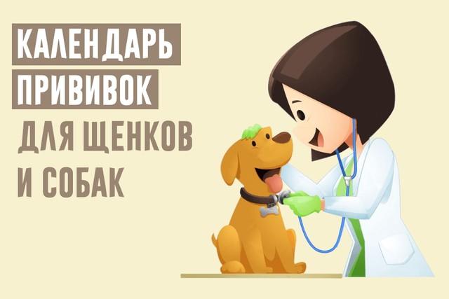 Календарь прививок для щенков и собак