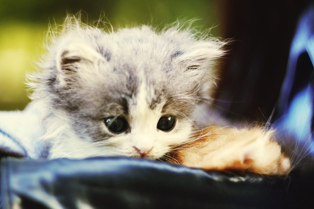 Как назвать котенка: 200 кошачьих имен со значением