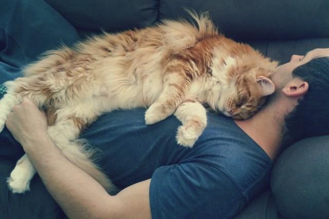 Почему коты так обожают спать на людях