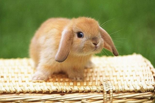 ТОП-10 самых милых животных в мире
